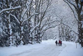 Magia zimy na Cmentarzu Centralnym