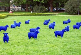 Niebieskie stado na Jasnych Błoniach